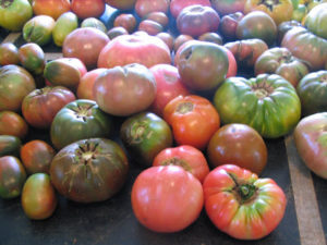 Cover photo for Varieties Included in the Organic Heirloom Tomato Study