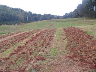 truffle planting site at the research station