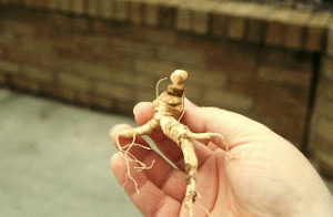 Cover photo for NC Ginseng Dealer Is Sentenced to Prison