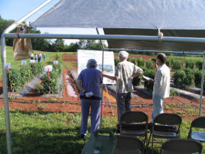 Cover photo for Asking for Your Input on Organic Research Needs in Western North Carolina