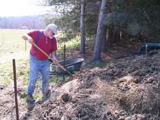 man planting trees