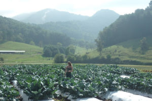 Cover photo for Winter Vegetable Conference in Asheville