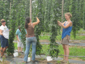 Cover photo for Hops in North Carolina and New York