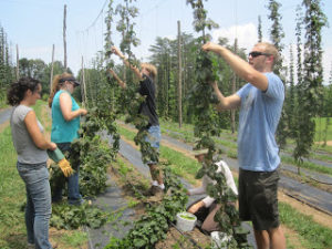 Cover photo for Are You an Organic Hops Grower? Have I Got a Deal for You!