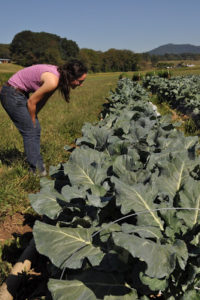 Cover photo for Organic Broccoli Workshop!