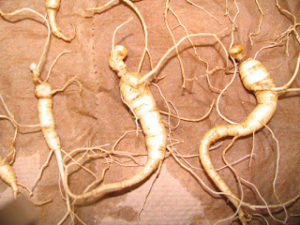 Cover photo for Wild-Simulated Ginseng Conference on Dec. 7 and 8, 2012