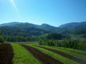 Cover photo for We Expanded Our Research and Demonstration Truffle Orchards This Week!