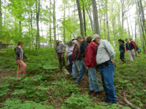 Cover photo for Walking Tours of Our Woodland Botanicals Research