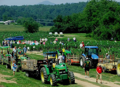 busy field day scene