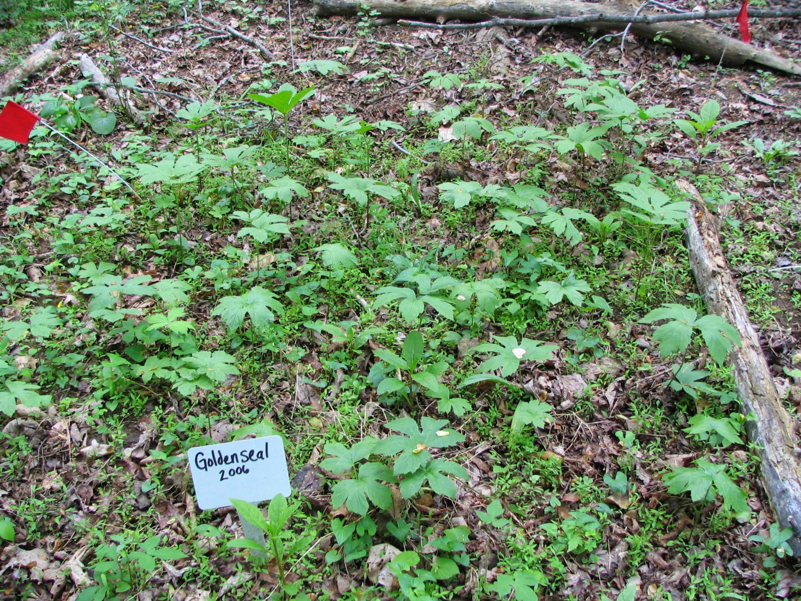 goldenseal plot