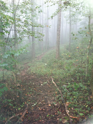 woodland scene on a foggy day
