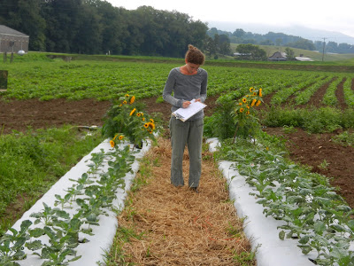 woman making notes in broccoli field trial