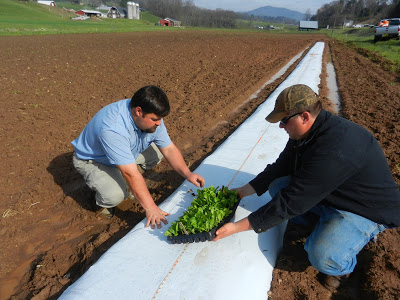 two researchers preparing to plant seedlings