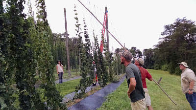 the restored hop yard