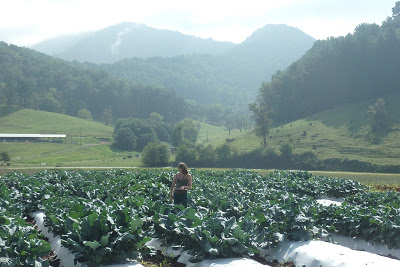 woman working in rows of vegetables