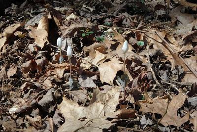 plants emerging through leaf cover