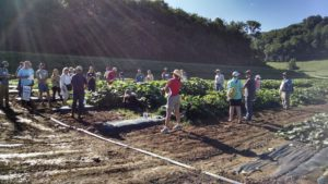 people in squash research plot at field day