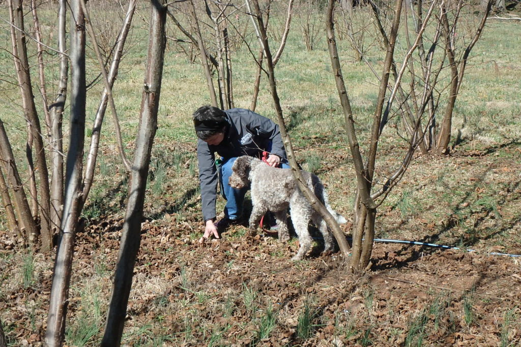Truffle hunting dog and her handler