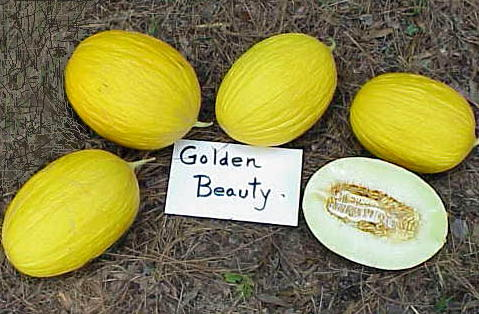 golden beauty melons