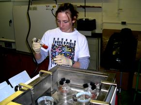 researcher working in the lab