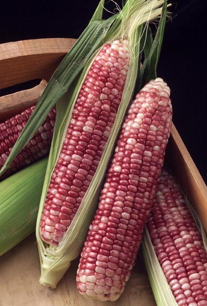 red kernel sweet corn