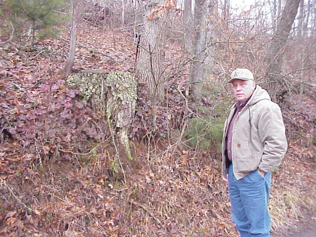 man standing near galax plants in a wooded area