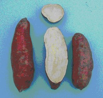 External and internal appearance of 'Japanese' sweetpotatoes