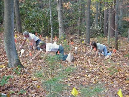 workers planting bloodroot for propagation study at Fletcher woods site