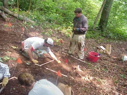 workers installing Waynesville companion planting (polyculture) study
