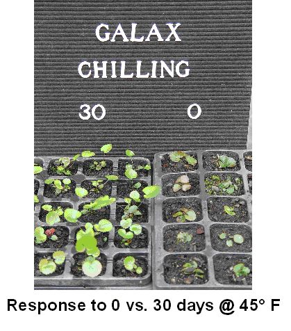 plants showing response to chilling study