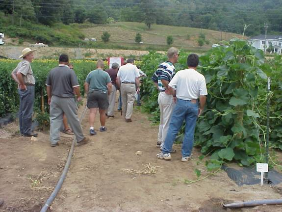 participants at heirloom and specialty vegetable field day