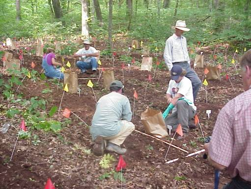 workers planting layout out and planting bloodroot