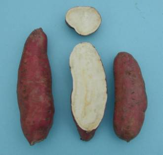 External and internal appearance of 'Japanese' sweetpotato