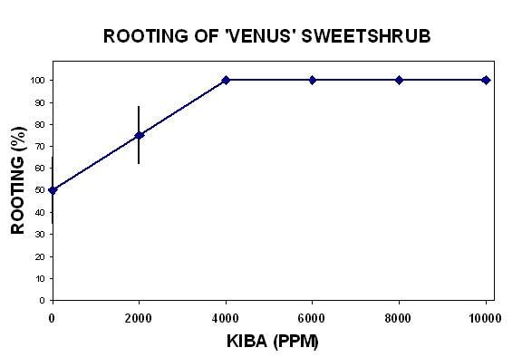 Figure 1. 'Venus' Sweetshrub PPAF - in flower and bud.