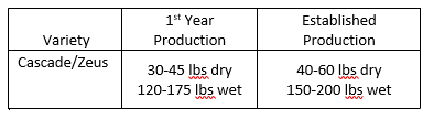 Average production observed for the two highest-yielding varieties (Cascade and Zeus) studied during this project.<br /> !! Numbers represent 200 plants on 0.25 acre !!