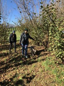 Hunting for truffles with a truffle dog