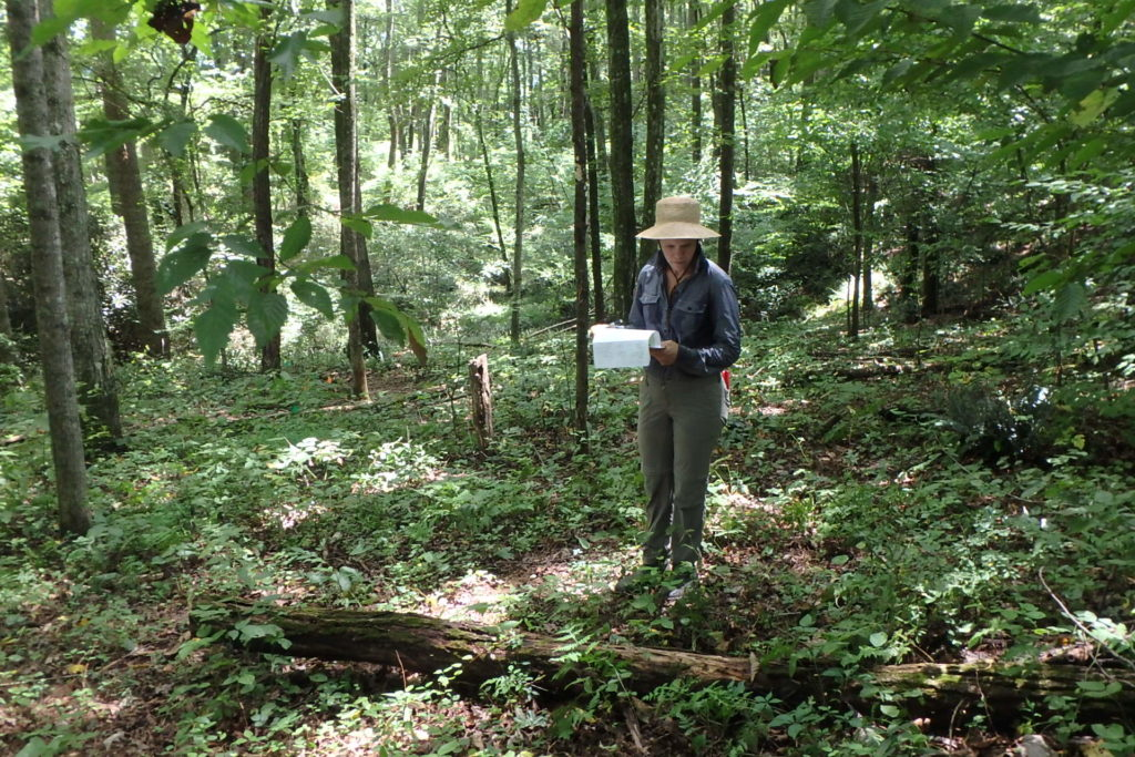 NC State research assistant collecting data on forest planting.