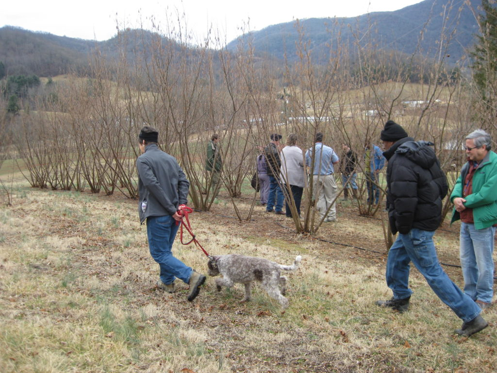 members of the North American Truffle Growers Association visiting the orchard