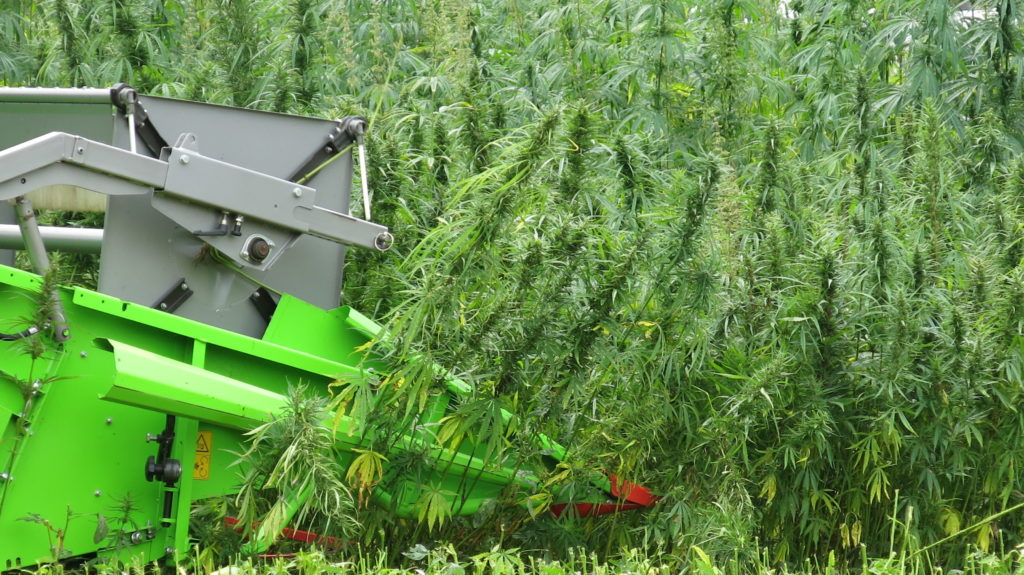 Harvesting industrial hemp grain in 2017