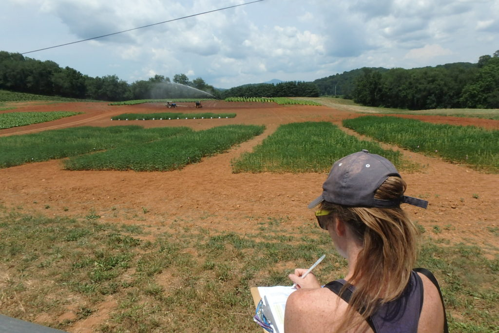 Image of woman collecting data on the 2017 industrial hemp planting in Waynesville, NC