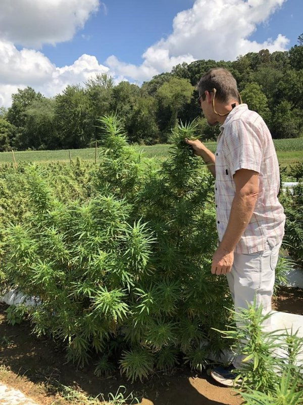 Bill Chioffi, medicinal herb buyers, checking out the NCSU CBD hemp trials (Photo borrowed from his LinkedIn profile).