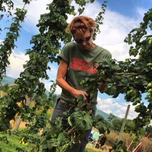 Cover photo for NC State Hops Conference in Asheville - Meet the Speakers