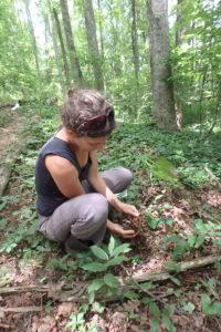 Examining woodland plants