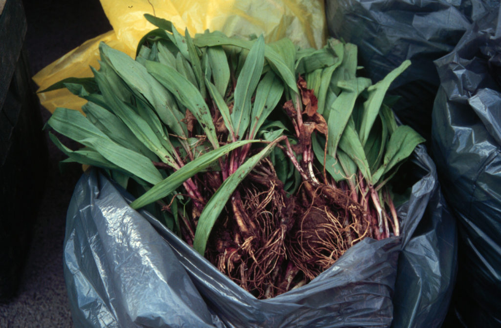 Ramps in a bag
