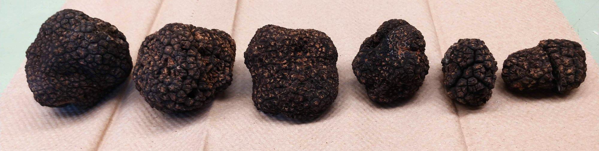 Six truffles