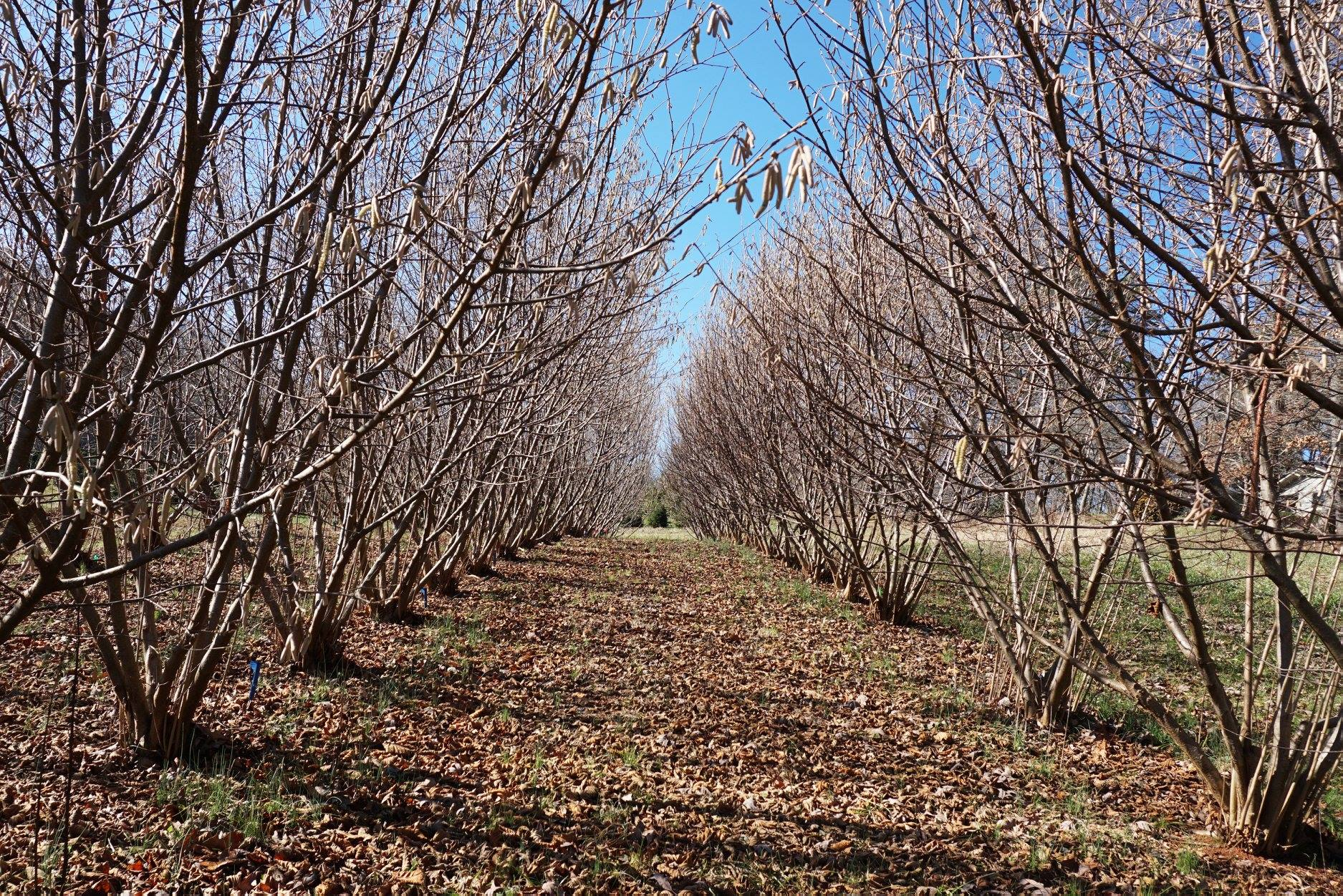 truffle orchard in January
