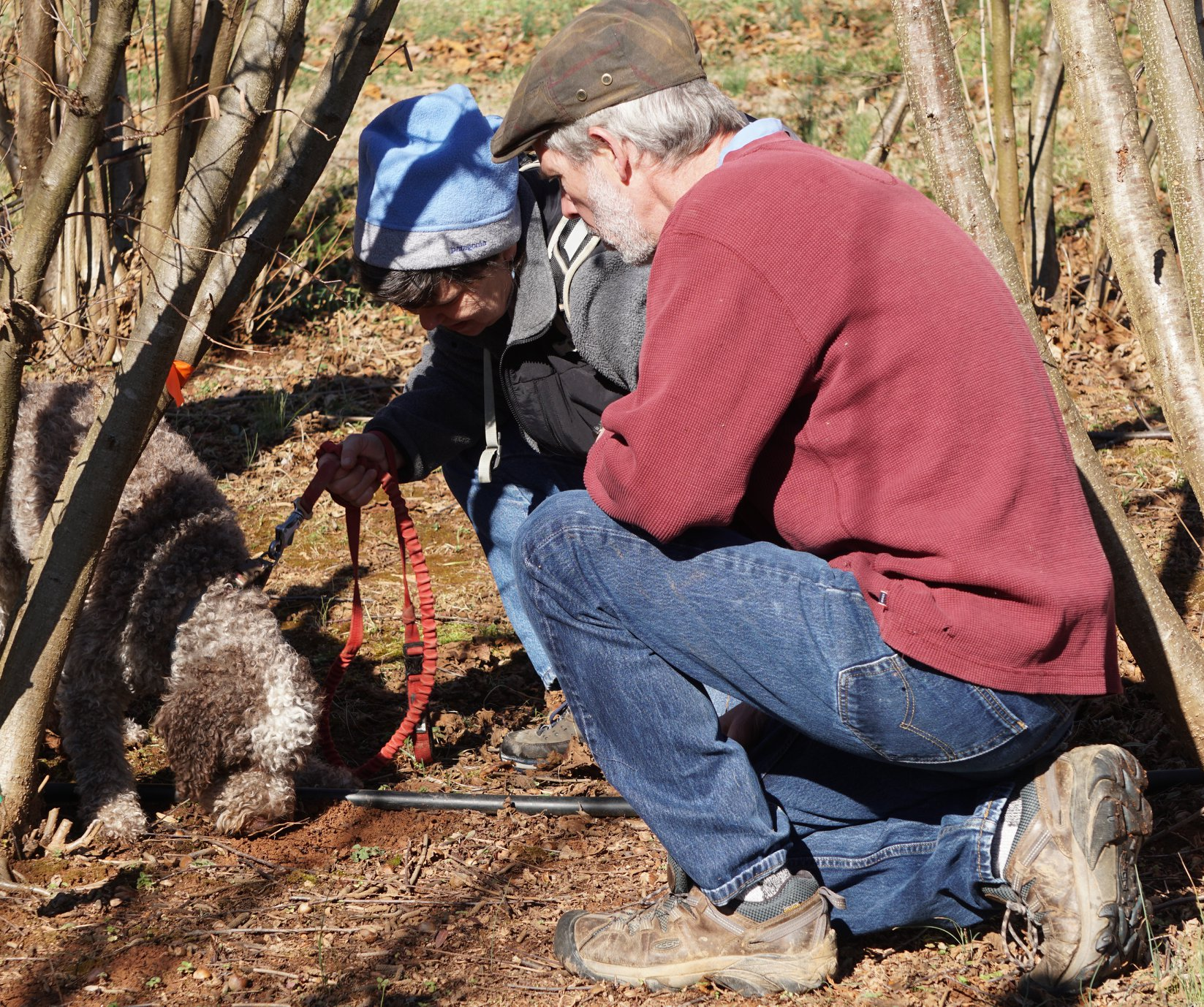 dog and two people sniffing out a truffle