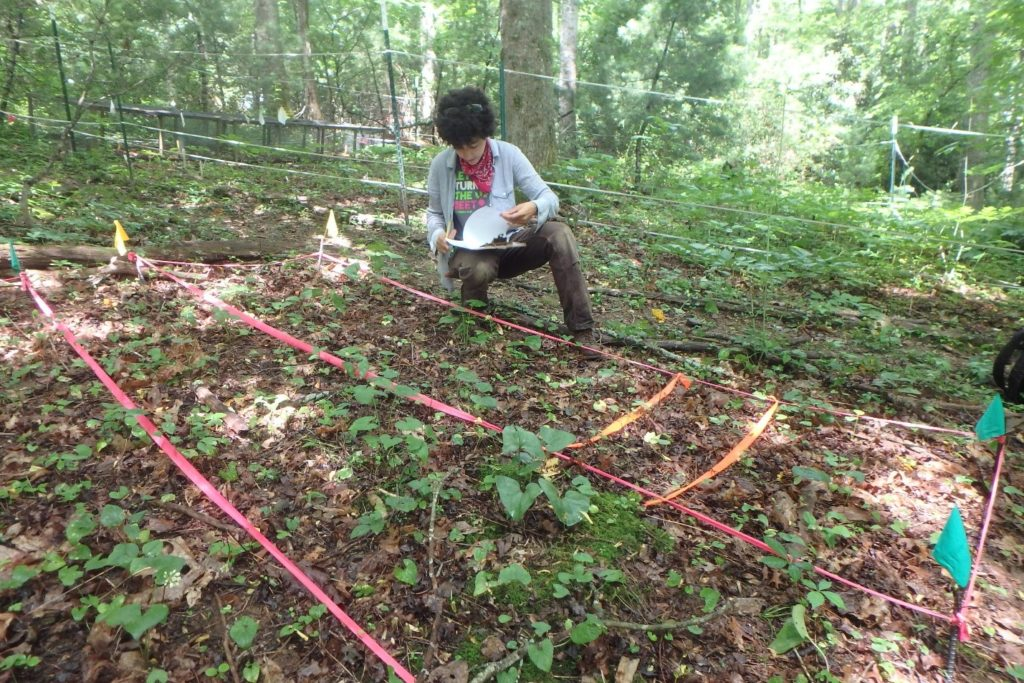 Researcher collecting data on ramps in the woods