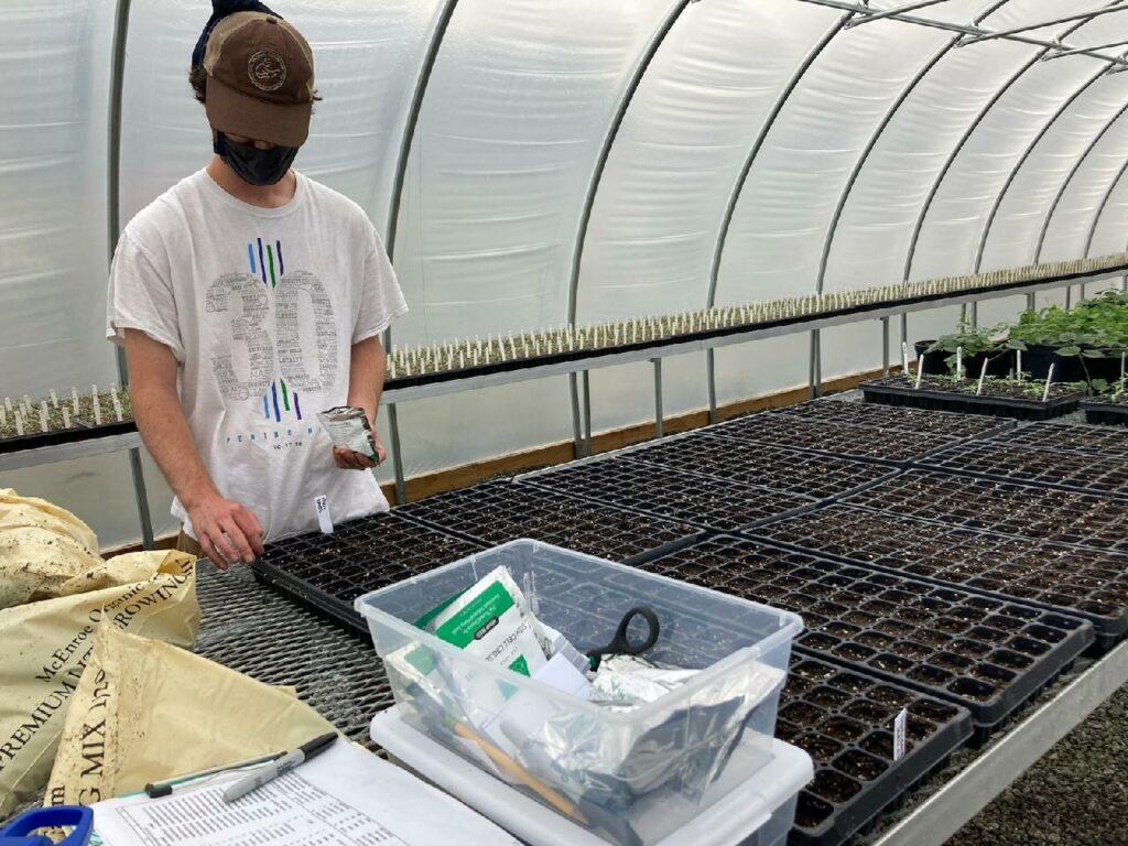 man seeding flats with hemp seed