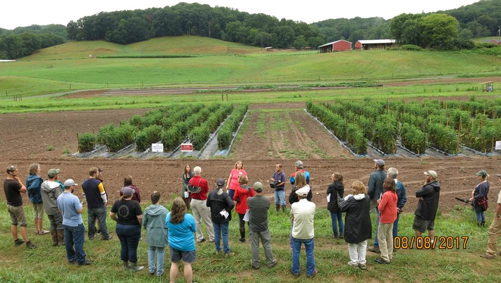 people looking at research tomato trials